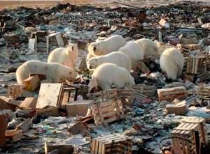 Мусор в Арктике